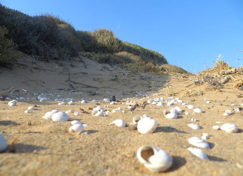 Rizzuto_spiaggia_santa_domenica_01-001.jpg