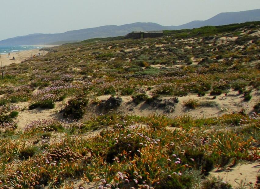 Badesi Mare, pohled směrem k Isola Rossa s kilometry volných pláží