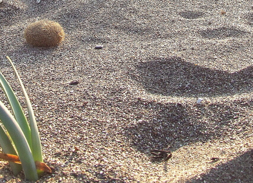 Marina di Castagneto Carducci, typ písku na pláži