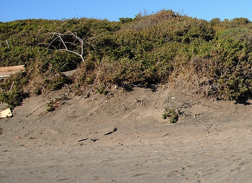 Marina di Pescia Romana, pláže lemují křoviny (chráněná krajina) s cestičkami