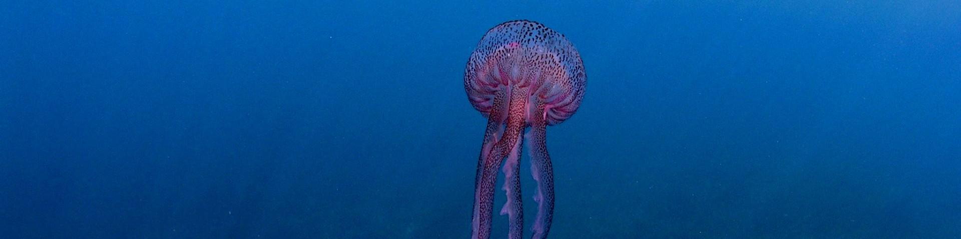 """V Nisporto je potápěčské centrum a zde vidíte jeden z """"úlovků"""""""