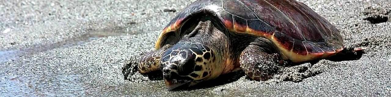 Brancaleone, výskyt želv je typický pro toto pobřeží