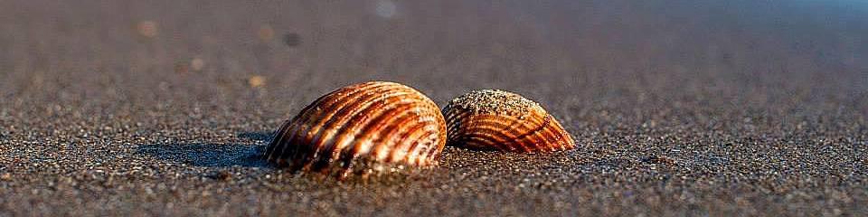 Ladispoli, v městečku je tmavý písek, na jeho okrajích spíše dohněda