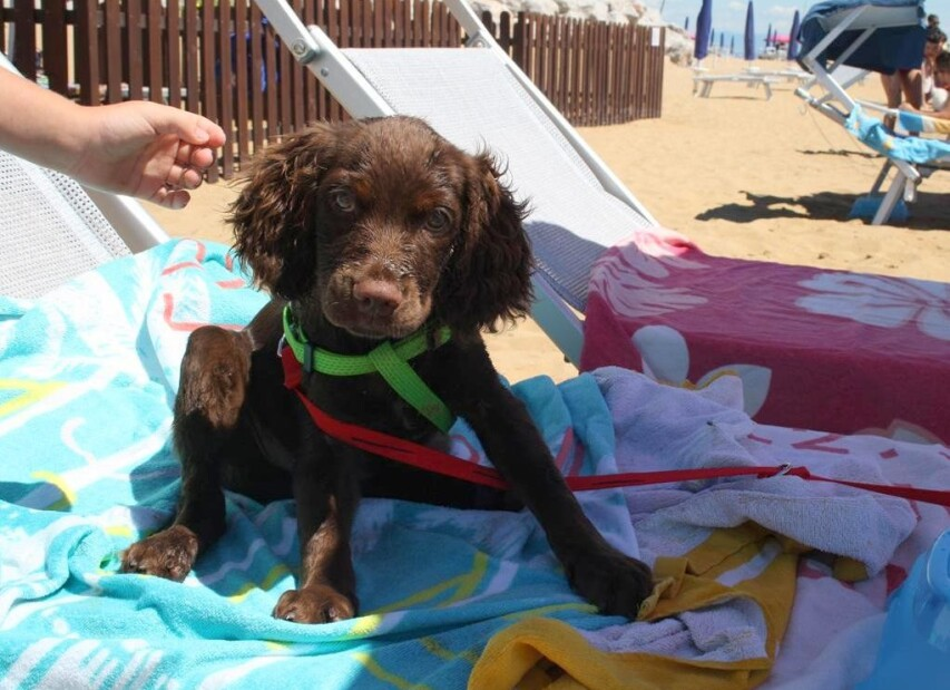 psí pláž La Spiaggia di Duke - Lignano Riviera