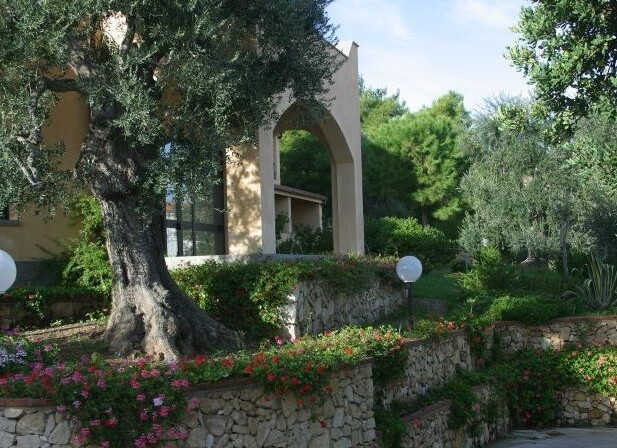 8old olive trees near the entrance hill building.jpg